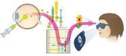 Fokus Forschung - Molekulare Lichtschalter – Zellen mit Licht steuern
